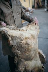 A farmer holding sheepskin
