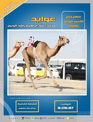 صور سباق الجذاع (الأشواط العامة) مهرجان الأمير الوالد مساء  22-1-2020