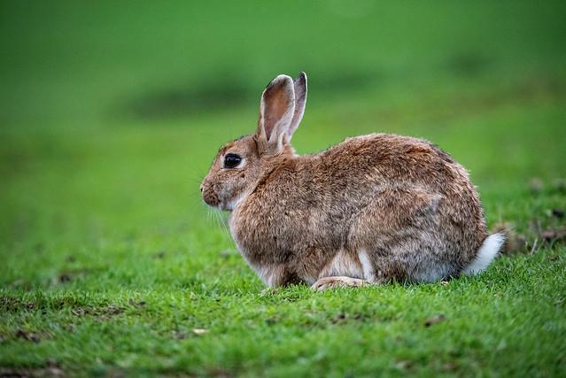 Rabbit 😎