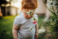 Kid facing flower daisy outdoors