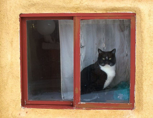 Feral House Cat
