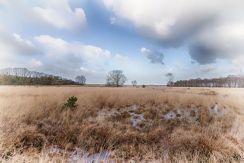 Nationaal Park Dwingelderveld in Drenthe