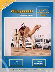 صور سباق الجذاع (الأشواط المفتوحة) مهرجان الأمير الوالد صباح 23- 1-2020