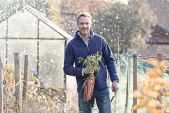Man down at his allotment picking carrots in winter snow