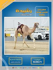 صور سباق الجذاع (الأشواط المفتوحة) مهرجان الأمير الوالد مساء 23- 1-2020
