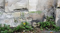 Paris Wall I