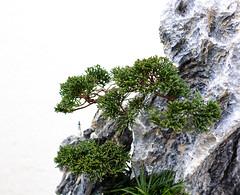 Climb - Bonsai Jazz Collection