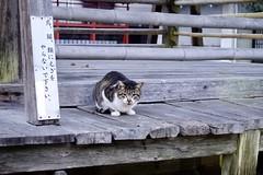 Today's Cat@2020-01-24