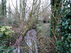 Lys (rivière Leie) à Rekkem - Photo of Roncq