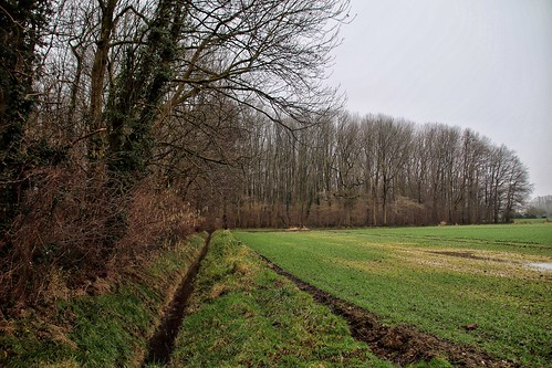 January on the Lower Rhine