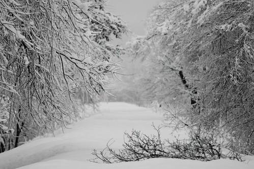 Snow / B&W