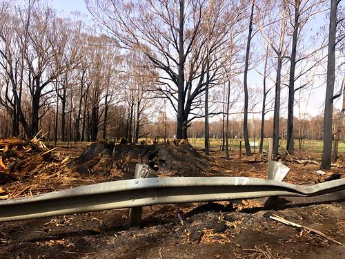 Damage from bushfires - Sassafras