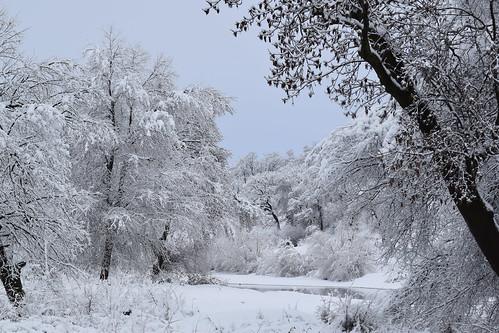 Winter morning / river