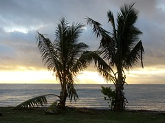 Dusk Palms
