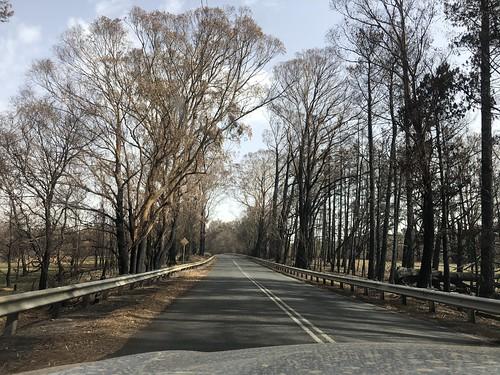 Bushfires - Sassafras, NSW