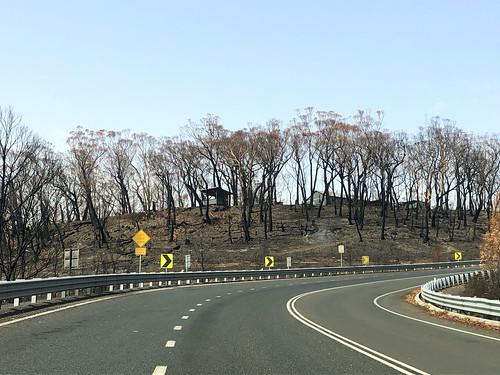 Somehow - appears no damage - Sassafras bushfire