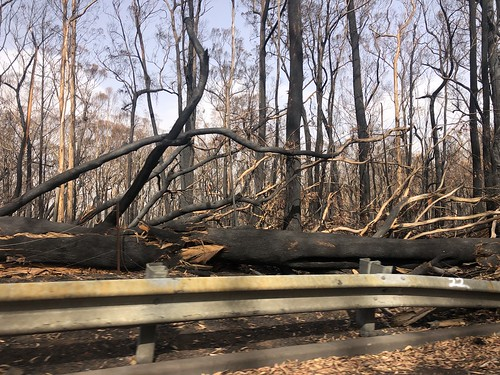More fallen trees Sassafras bushfires