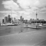 Soft Auckland  (MF Ultrafine eXtreme 100)