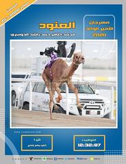 صور سباق الثنايا (الأشواط العامة) مهرجان الأمير الوالد صباح  25-1-2020