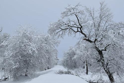 Winter morning / path