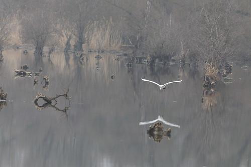 En planant au-dessus des marais