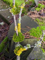 twig ecology