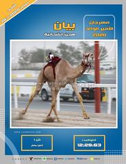 صور سباق الثنايا (الأشواط المفتوحة) مهرجان الأمير الوالد صباح 26-1-2020