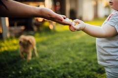 A hand giving out a daisy to a small child with a dog in the background