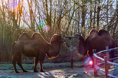 Gaia Zoo ( Januar 2020 )