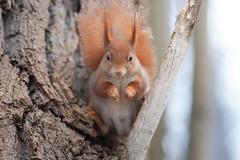 Squirrel under arrest