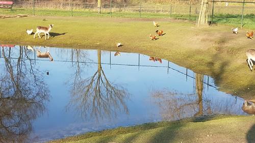 Kinderboerderij Vierlingsbeek
