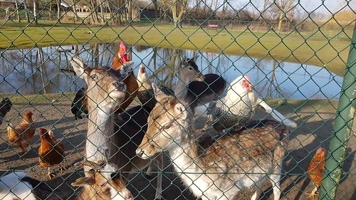 Dieren achter het hek