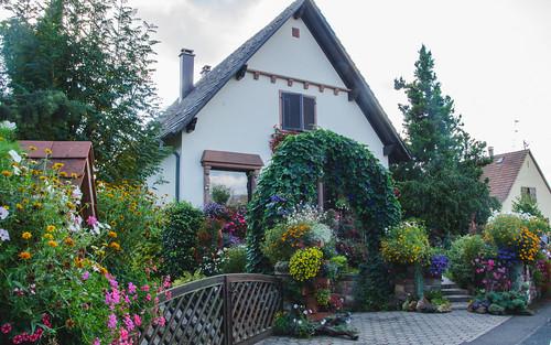 Maison fortement fleurie d'Hindisheim