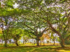 Pasir Ris Park, Singapore - Explore