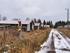 Abandoned Mink Ranch