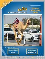 صور سباق الحيل والزمول (الأشواط العامة) مهرجان الأمير الوالد مساء  27-1-2020