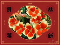 Happy Chinese New Year, Singapore