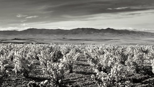Land of wines. Longares.