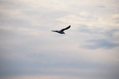 Soaring on the Wind