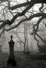 "Cincinnati - Spring Grove Cemetery & Arboretum ""Foggy Morning At Old Oak Tree"""