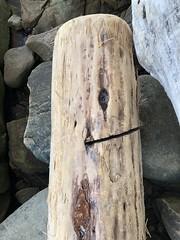 Driftwood log face