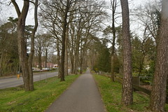 Allee van bomen in Ommen (136FJAKA_3334)