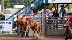 Week 30 - Exit - Rodeo Bucking Chute Saddle Bronc Cowboy