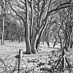 Wintery Woodland by John Russell
