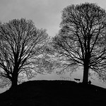 Trees on a hill by Elaine Robinson