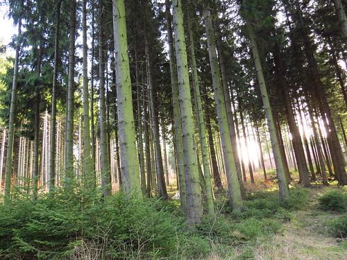 im Thür. Wald