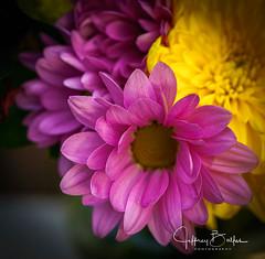 2020 01 Flowers