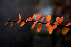 Rote und orangene Blätter