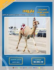 صور سباق الحيل والزمول (الأشواط المفتوحة والعامة) مهرجان الأمير الوالد مساء 29- 1-2020