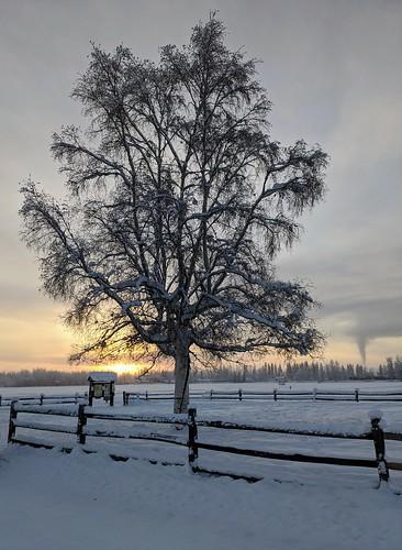 Morning walk at Creamer's Field